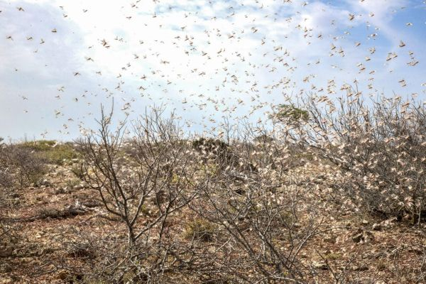 TRACKING DESERT LOCUSTS WITH SATELLITE SERVICES